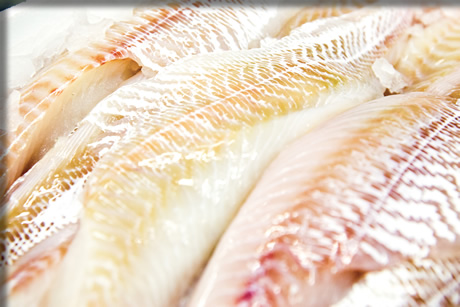 8oz Haddock Fillets
